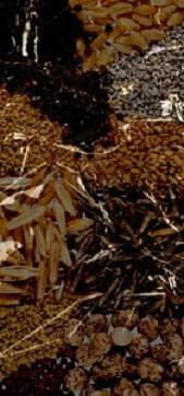 Recopilacion de cereales para la fabricación de cervezas artesanales